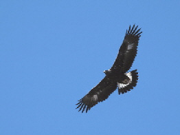 Vultur hp 2