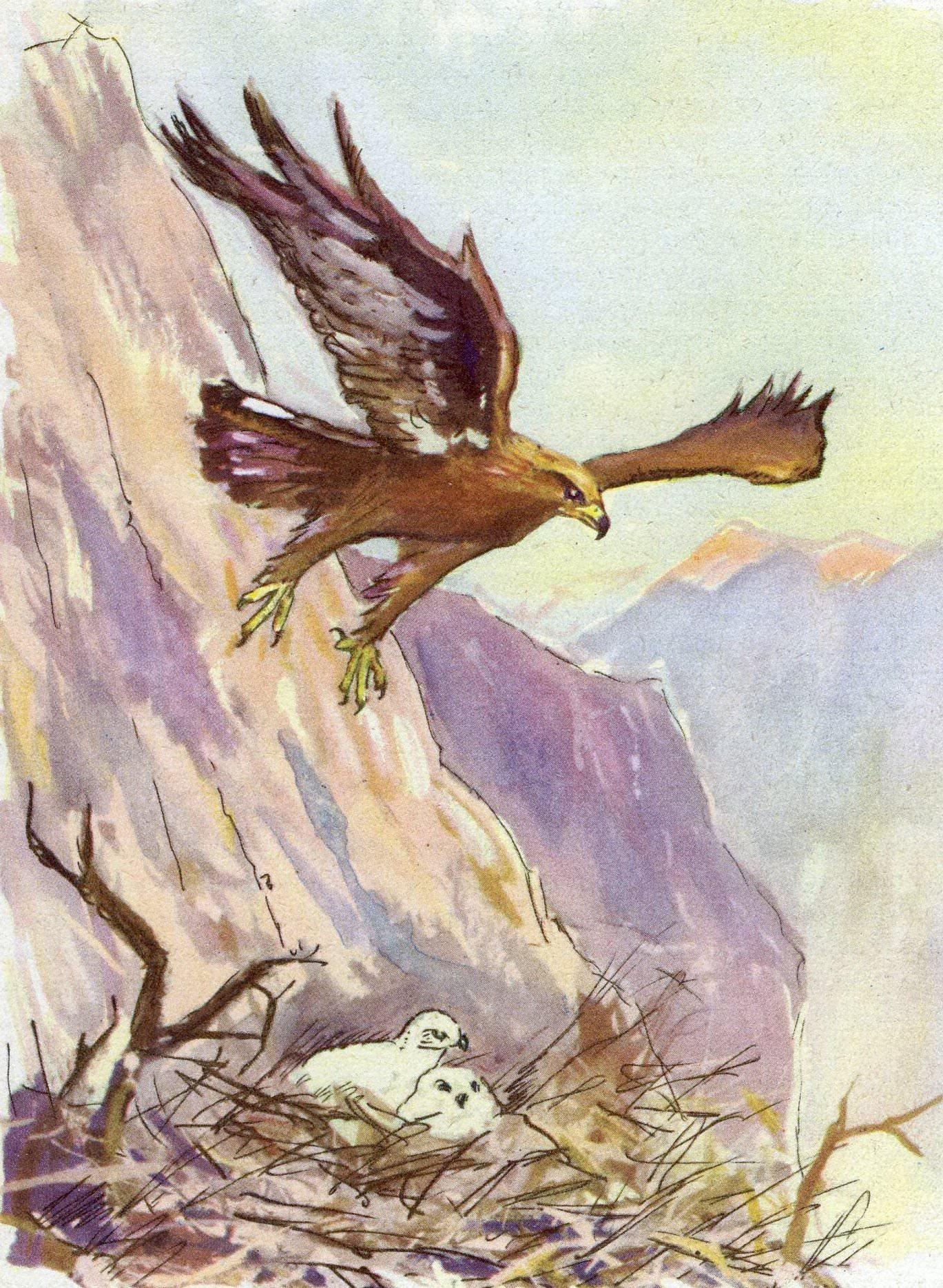 Vultur hp 1